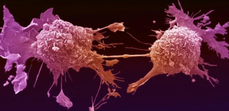 «Растение, убивающее рак с метастазами!» Оно всегда было под ногами.