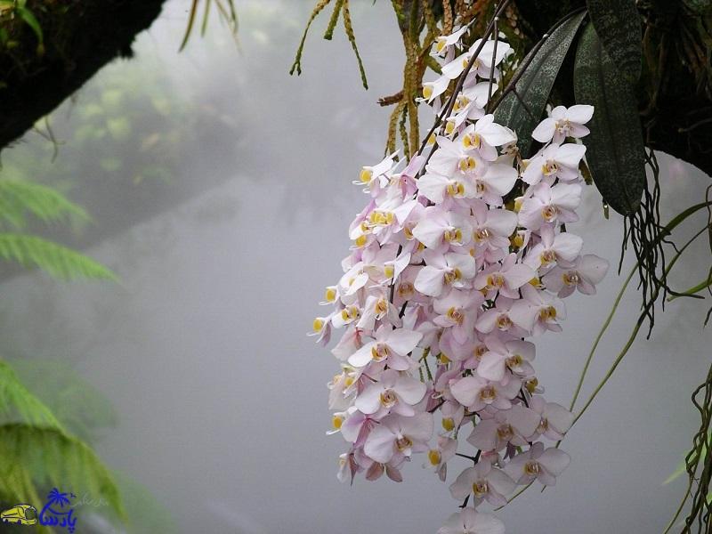 Всё это время ты подкармливала орхидеи неправильно! Обрати внимание на одну деталь…