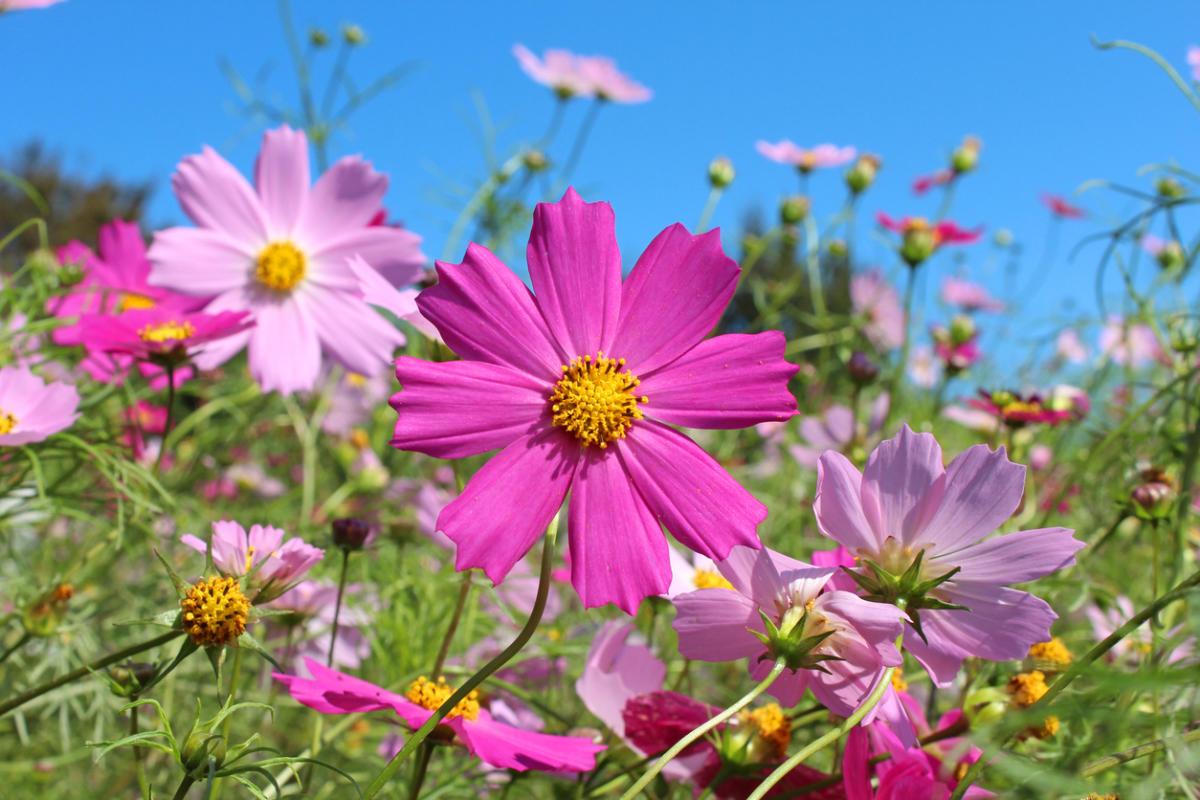 Садовые цветы: 8 самых неприхотливых популярных растений