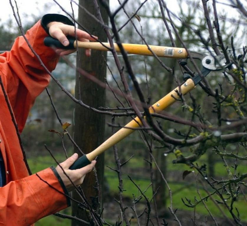 Как подготовить фруктовые деревья к зиме? Какие работы следует выполнить осенью