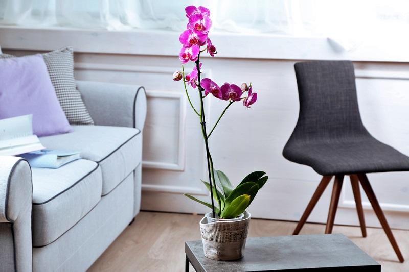 Как достичь максимального цветения орхидей: советы Алексея Горобея. В моем доме на каждом подоконнике.