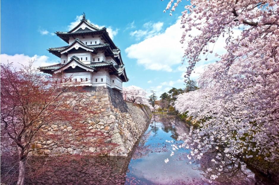 Весна пришла: самые красивые цветущие деревья