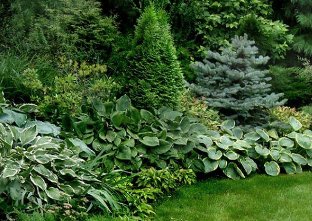 Как красиво разместить хосты на участке. Дизайнерский подход к выращиванию хост на даче.